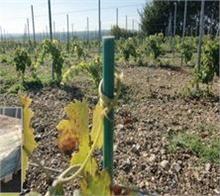 Tuteurs composites pour palissage des vignes